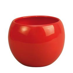 Salvia 12x12cm rojo