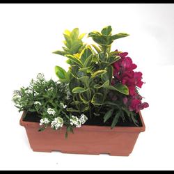 Jardinera planta exterior 25cm
