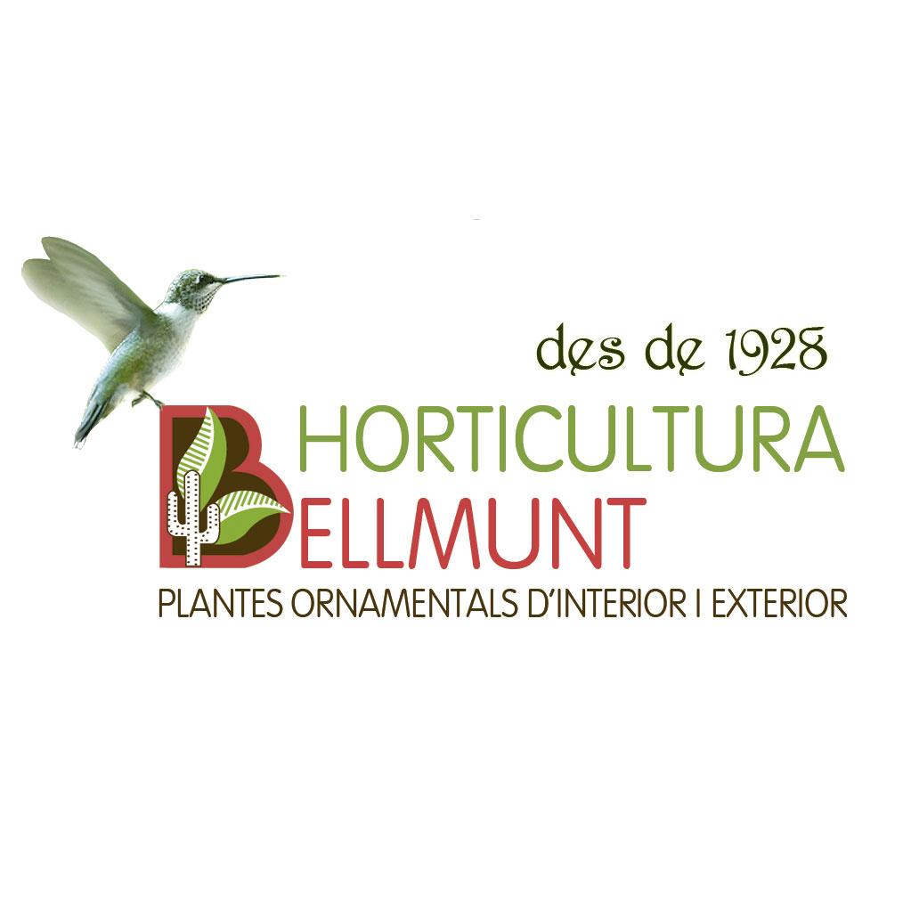 Messembryanthemum rojo-fucsia mix
